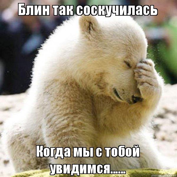 скачать белый медведь картинку
