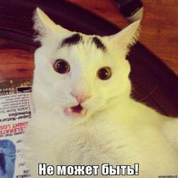 Мем удивление кот