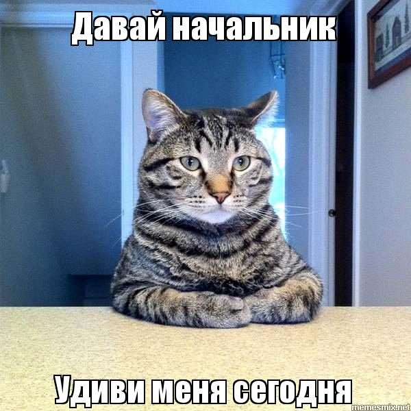 Удиви меня фото кота