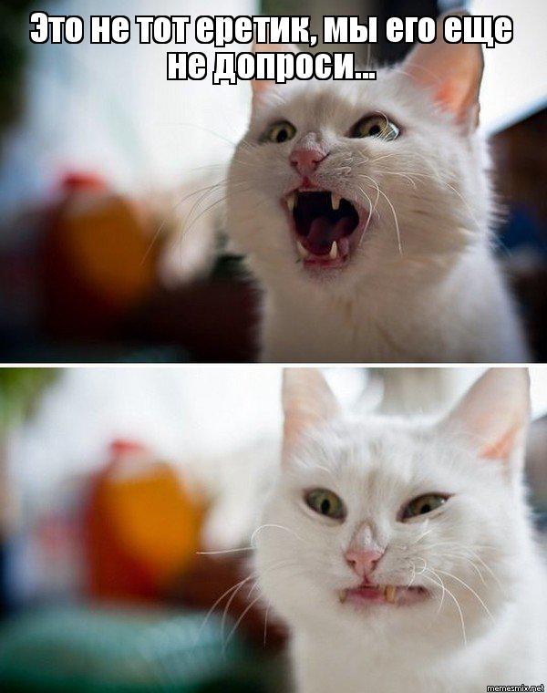 Как сделать шампунь для кошек 968