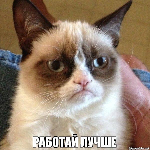 РАБОТАЙ ЛУЧШЕ, Мем Угрюмый кот