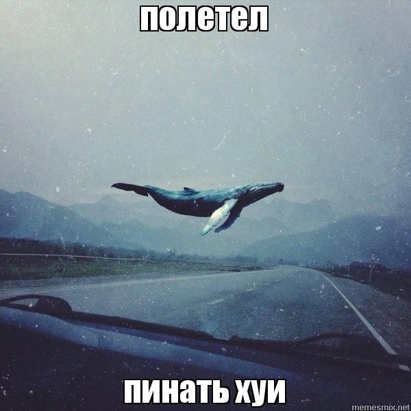 Видеозаписи Серыя Бобера ВКонтакте