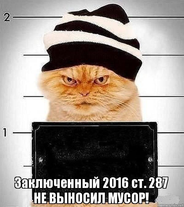 Кот заключенный фото