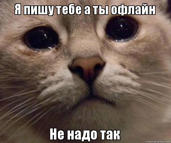 Мем кот а как надо