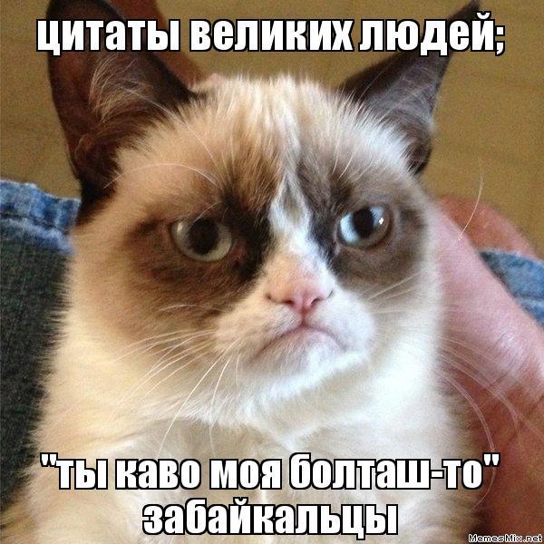 Цитаты коты и люди