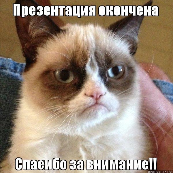 Фото спасибо от котов