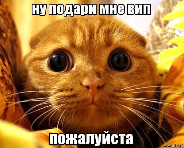 Кот вип