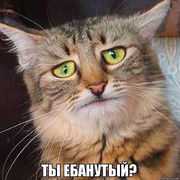 фото кот суббота