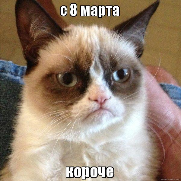 Картинки котов к 8 марта