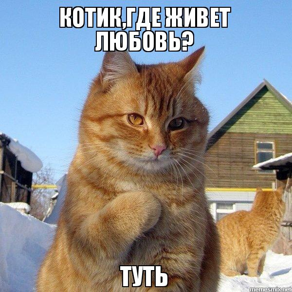 картинки про любовь котики