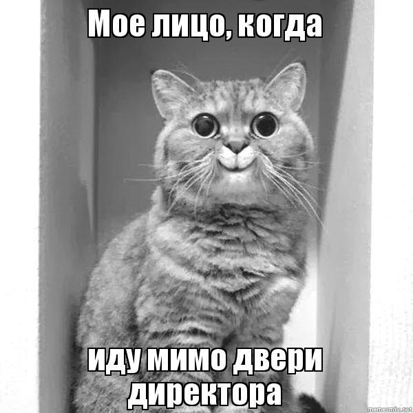 Мое лицо когда иду мимо двери