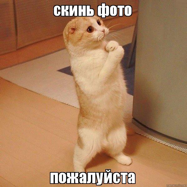 пожалуйста скинь фотки