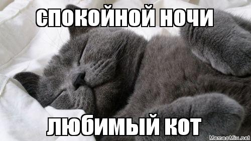 Спокойной ночи фото котов