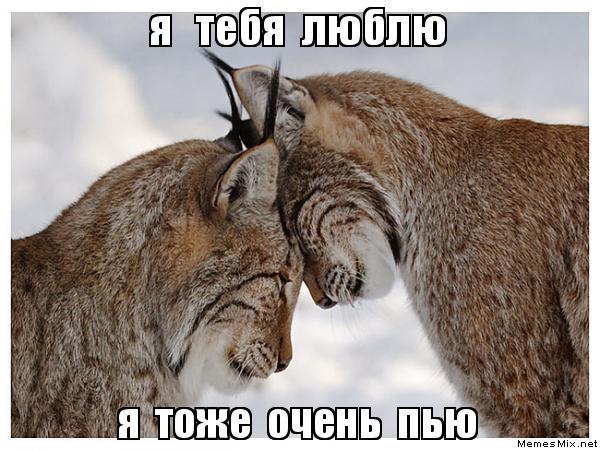 я тебя люблю я тоже тебя нет: