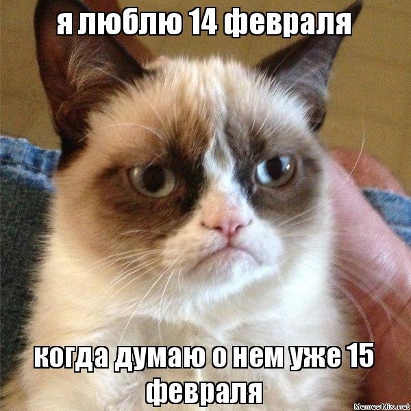 я люблю 14 февраля когда думаю о нем уже 15 февраля, Мем Угрюмый кот