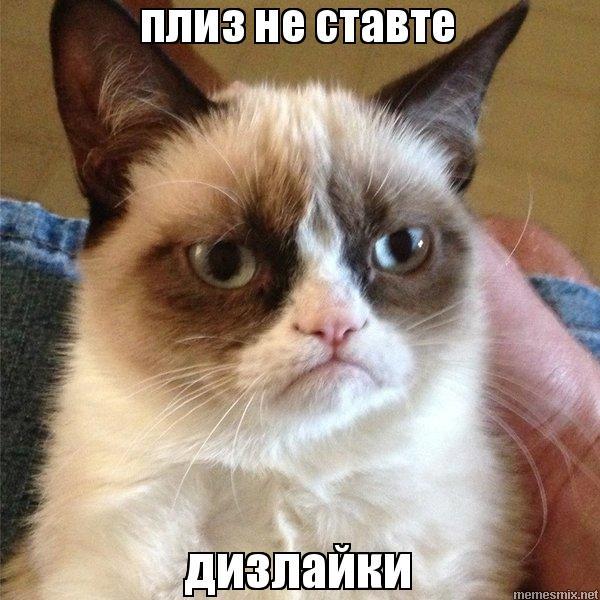 Кот плиз