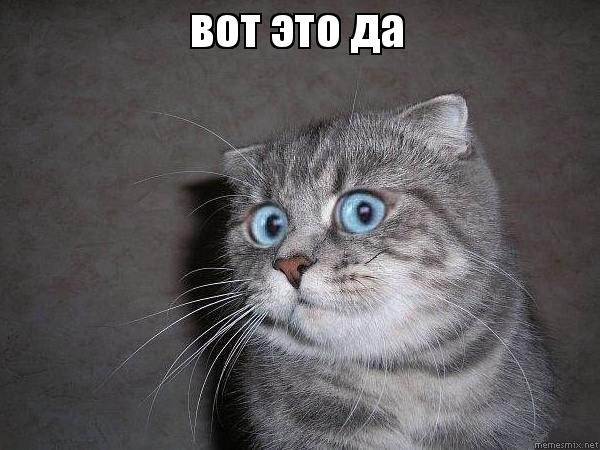 Картинка удивлённый кот