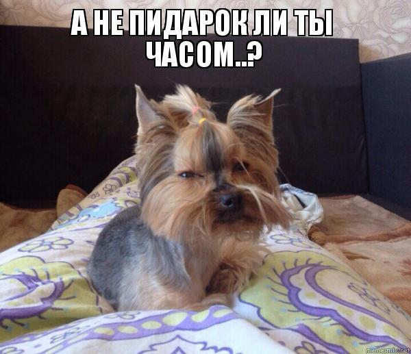 a-ne-suchka-li-ti-chasom