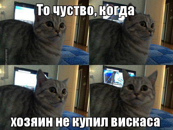 как побовоть чувство вины когда отдаешь кота Василеостровский, Выборгский, Калининский