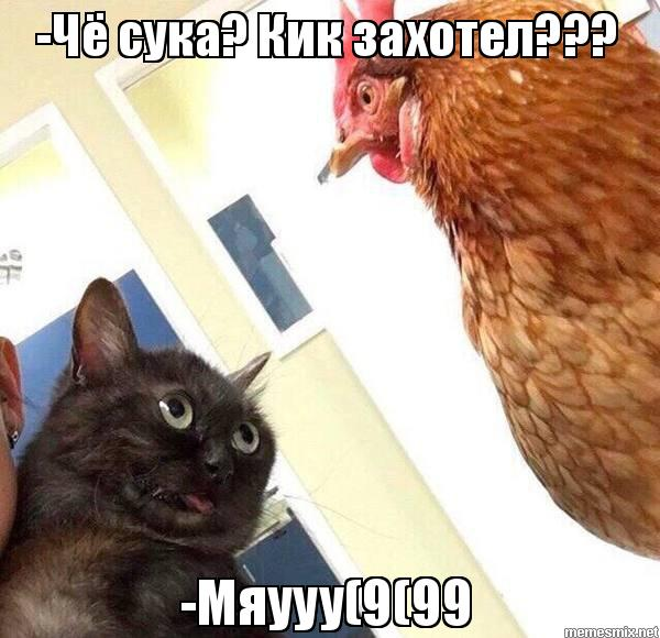 Кик кот