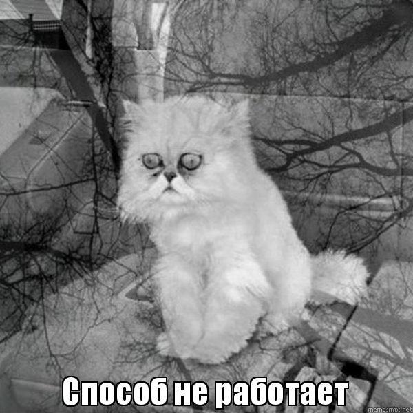 огромного как побовоть чувство вины когда отдаешь кота водителя