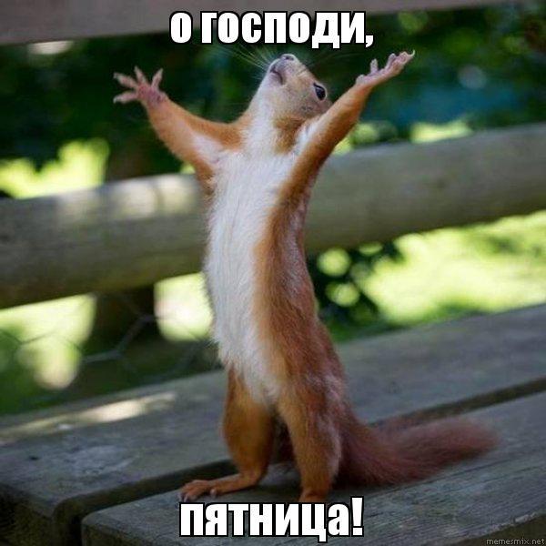 о господи, пятница!, Мем Белка