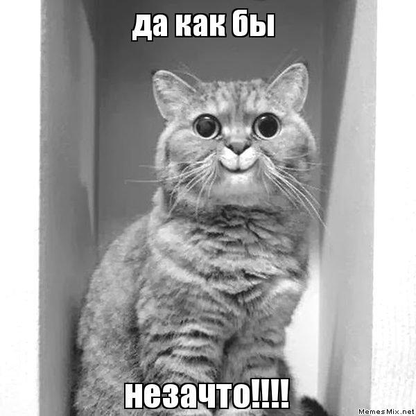 да как бы незачто!!!!, Мем Мое лицо, когда (кот)