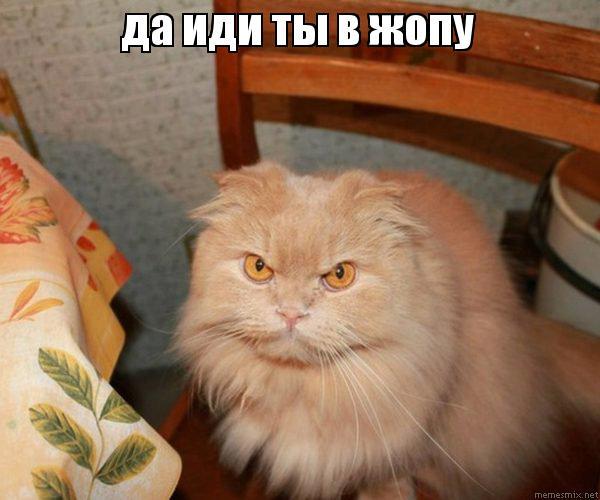 ПОШЛА В ЖОПУ ФОТО 20 фотография