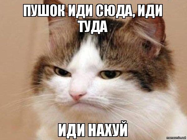 Пошел нахуй кот ссылка