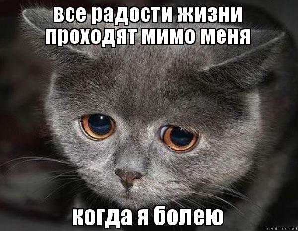 все радости жизни проходят мимо меня когда я болею, Мем Грустная кошка