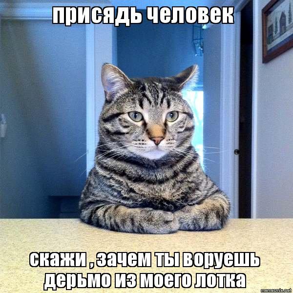 Человек и кот мем