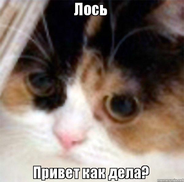 Кот и лось