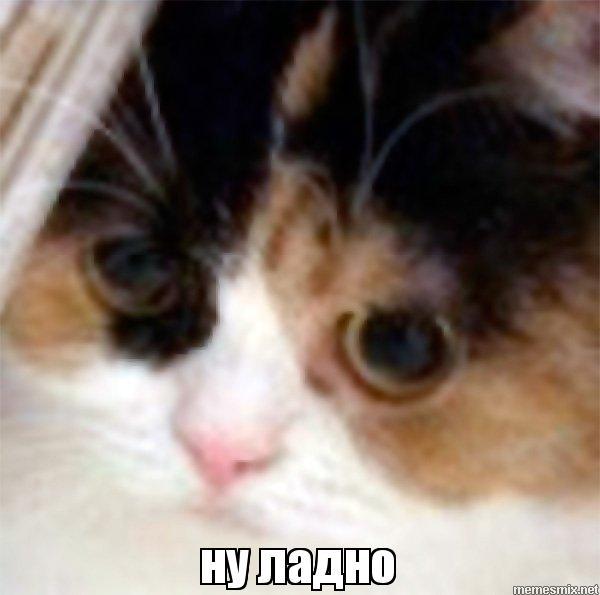 Кот ну ладно