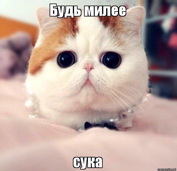 Няшные кот фото