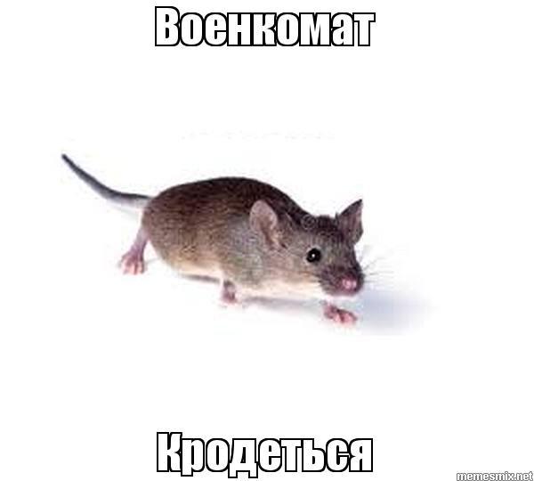 """Картинки по запросу """"военком мем"""""""""""