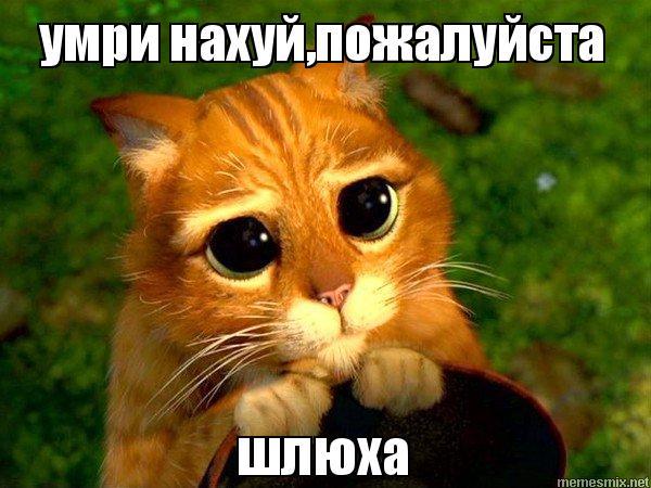 Картинка с котом умри