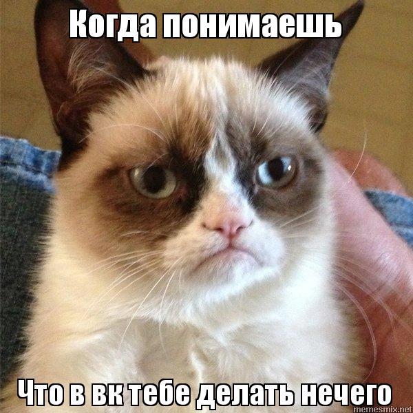 Кот из вк мем