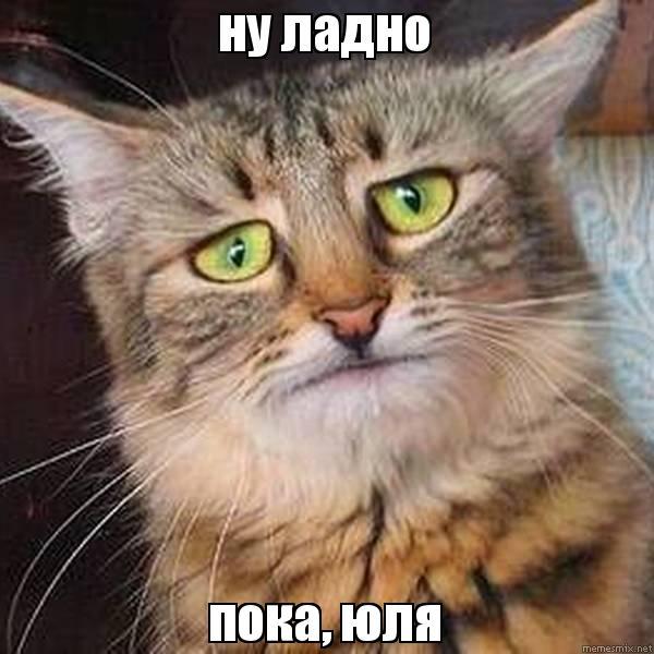 Ну и ладно кот
