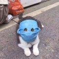 Кошка и маска от коронавируса