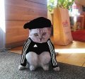 Кот гопник