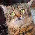 Кот печальбеда