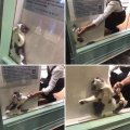 Кот застрял в витрине