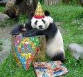 С днем рождения панда