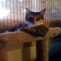 Самый интересный кот в мире