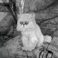 Тленный кот