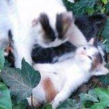 мем Адыхай кот