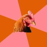 мем Не Шутящая Курица