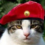мем Боевой кот