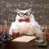 мем Кошка химик