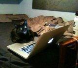 мем Черная кошка и ноутбук